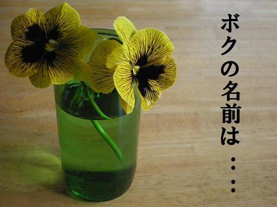 2009_0323_162913-IMGP1721.JPG